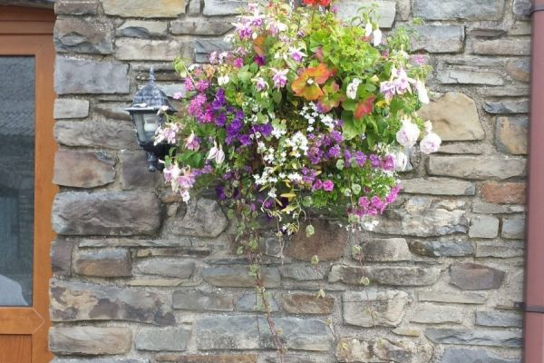 Beautiful Hanging Flower Basket Outside The Cottage